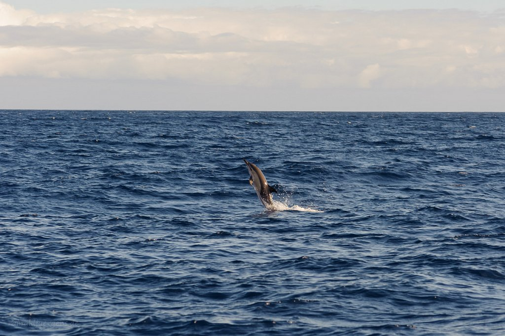 H2O Whale & dolphin watching Madeira