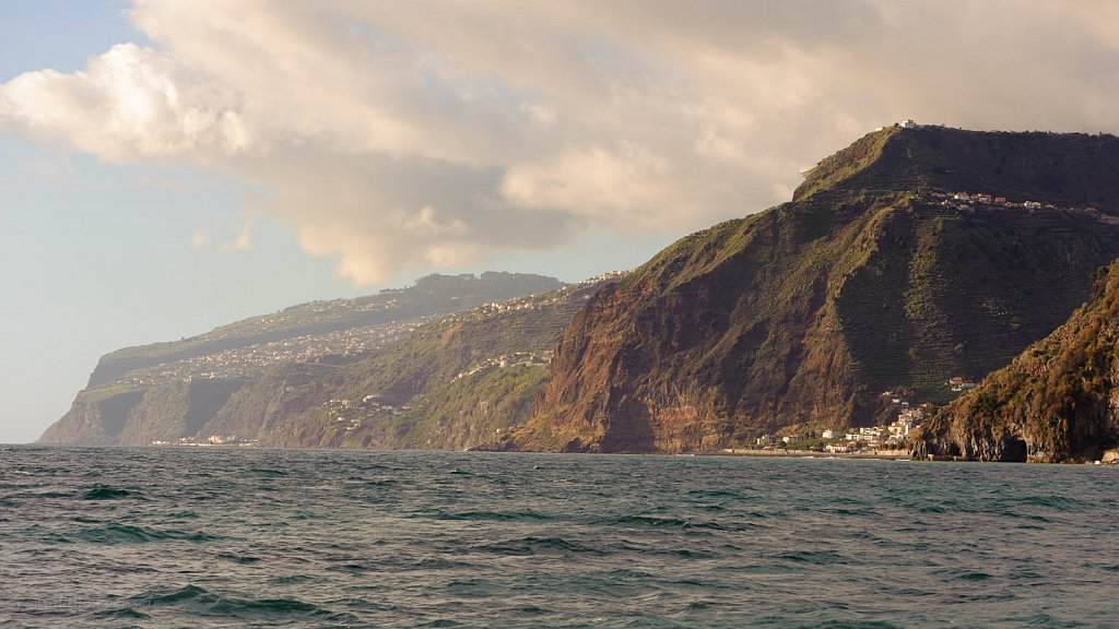 Whale & dolphin watching Madeira